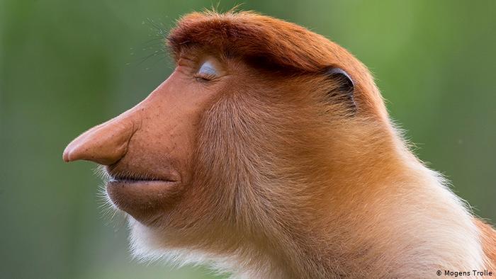 تصاویر/ برندگان عکاسی از دنیای حیات وحش در ۲۰۲۰